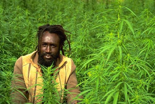 jamaica-marijuana-1