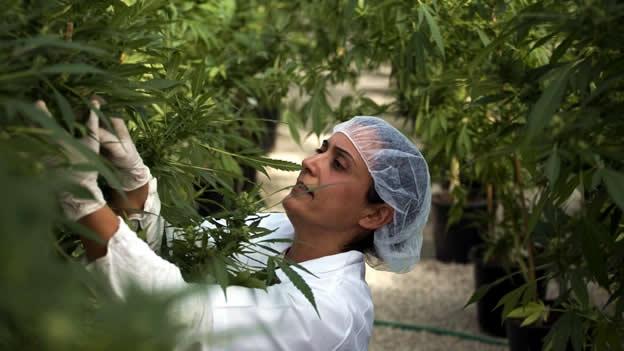 La ciencia confirma los beneficios del cannabis